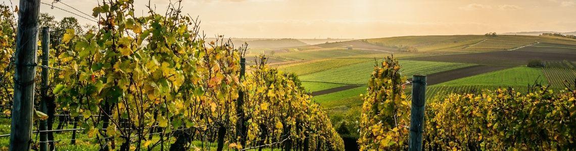Qu'est ce qu'un vin sans sulfite et pourquoi le choisir, vin bio, vin naturel, vin biodynamique